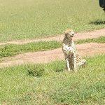 Tsavo National Park Day Trip From Mombasa