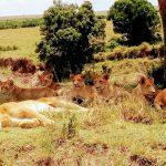 KENYA Bush Expeditions TOURS AND TRAVEL HOLIDAY SAFARIS
